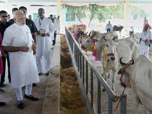 Prime Minister Narendra Modi visiting the Pashudhan Arogya Mela, at Shahanshahpur, Varanasi, Uttar Pradesh on Saturday.
