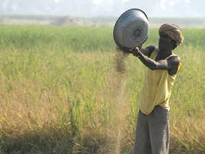 Rice ouptut is estimated to fall at 94.48 MT in the kharif season of the 2017-18 crop year (July-June) from the record 96.39 MT in last kharif,
