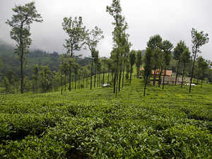 The likely increase in realisations over the near term is expected to have some favourable impact on the performance of Indian bulk tea players in FY2018.