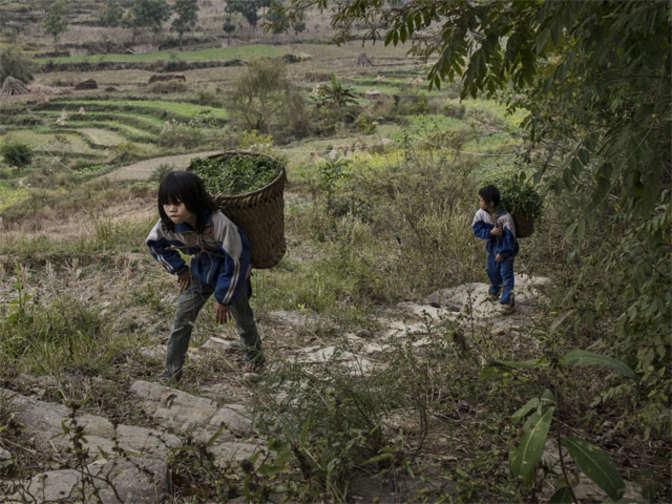 Child labour in india articles pdf