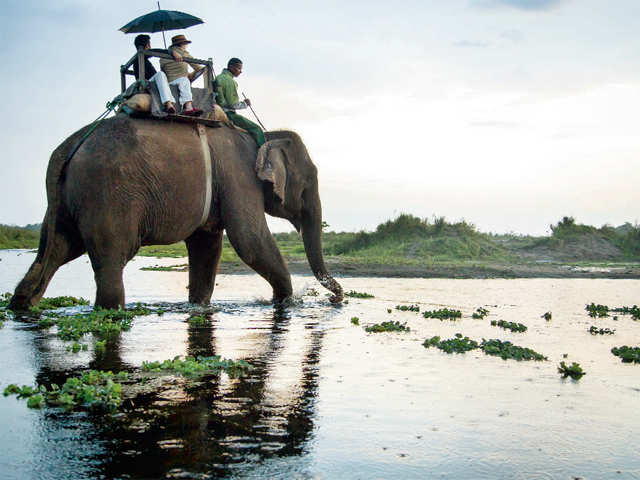Spotting creatures in the wild: Take an elephant safari or watch the peacock dance in Chitwan, Nepal
