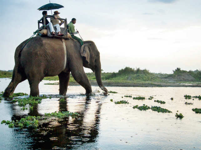 Chitwan in Terai region boasts of lush greenery all around. Take an elephant safari in the early hours to spot wild animals by the River Rapti.