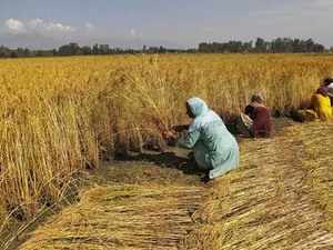 niti aayog agriculture growth likely to be above 3 in fy18 niti