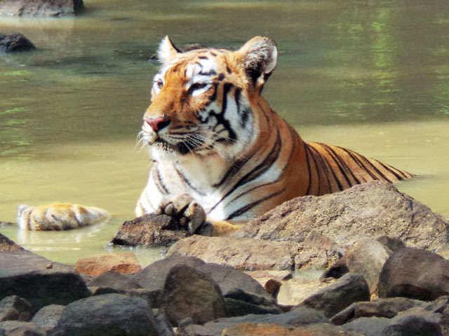 Tadoba's Andhari Tiger Reserve: A big delight for nature enthusiasts