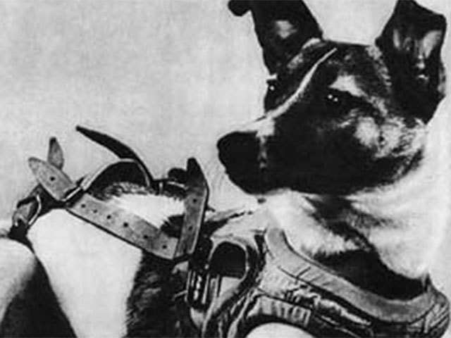 Dog: Touching story of Laika the stray dog which became the world's first  cosmonaut - Training the dogs | The Economic Times