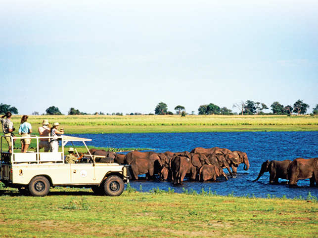 A group of explorers eagerly watch out a herd of elephants taking a dip in a watering hole.