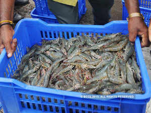 With the increase in vannamei shrimp output in the past few years, seafood companies are scaling up their production facilities.