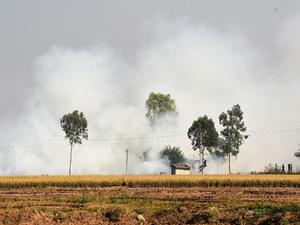Crop stubble being burnt near Kandimajra (Kurali) in Punjab.