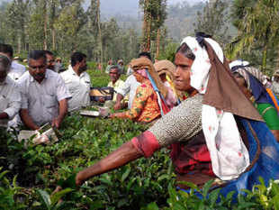 Shifting of offices, public sector units and headquarters of boards like Tea Board of India to Northeast India has been a long pending demand of several organisations in the region.
