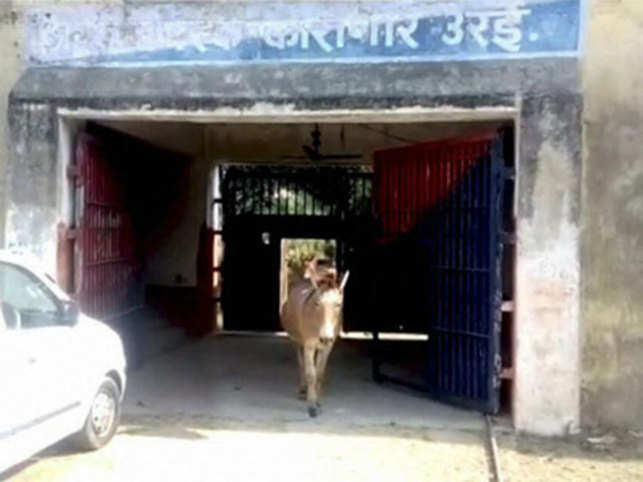 Uttar Pradesh: Police Detain Donkeys For Destroying Property in Jalaun