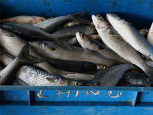 An agreement without exempting developing countries will restrict their flexibility to trade in fish and its byproducts, according to experts.