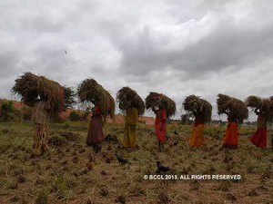 FCI Managing Director Divya Prakash Shukla said the government was monitoring purchase of paddy by private players.