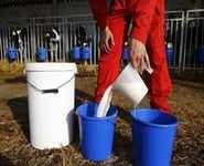 How better milk production may clean Delhi's air