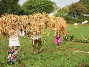 View: The culture of freebies must give way to the use of technologies in farm