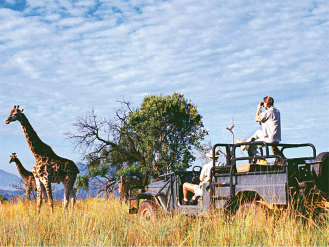 GLAMPING SAFARI: This time as you go travelling amidst wilderness, opt for 'Glamping' with luxurious camping options right inside a sanctuary. Enjoy a comfortable guided safari tour that can aid you in spotting wildlife closely (©GettyImages)
