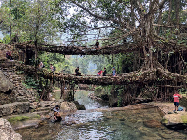 The double decker Living Bridge in East Khasi Hills are some examples (Pic: Ankur Jain)
