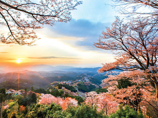 Travel goals 2018: Fall in love with the mesmerising cherry blossoms in Japan