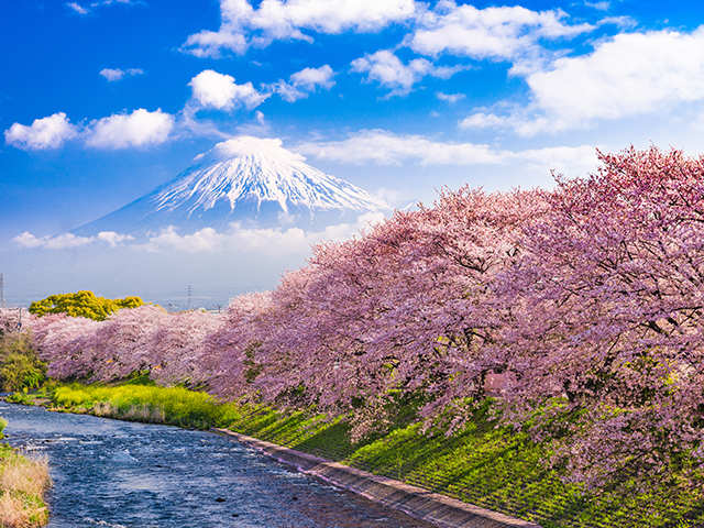 Spring or winter, Japan's myriad offerings make it the perfect destination for every season