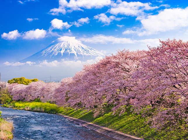 Fuji Mountain in spring.