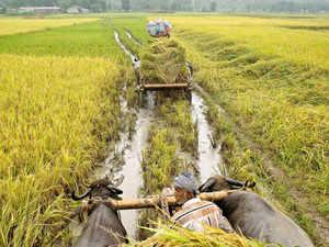 irrigation fund