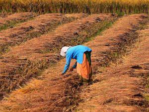 farmers-female-bccl