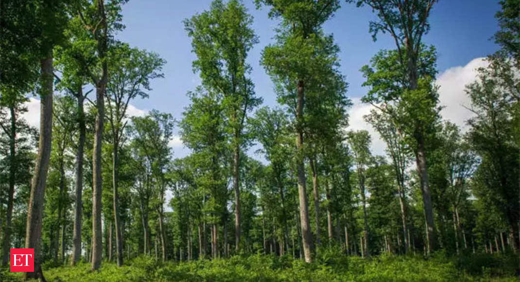 India Among Top 10 Nations In Terms Of Forest Area The