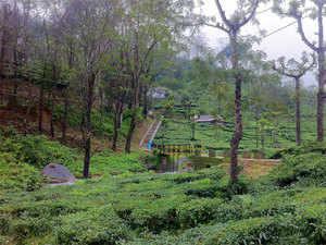 Tea growers demanded renegotiation of ASEAN– India FTA agreement