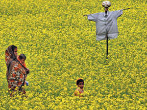 scarecrow---BCCL