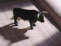 Bull-Thinkstock