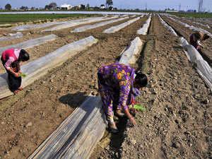 farmers2---PTI