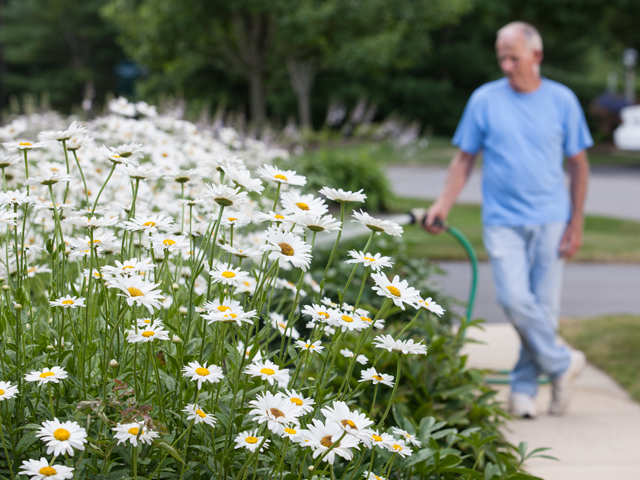 Walking the dog, pottering about in the garden can lower risk of death in older people