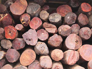 red-sandalwood-