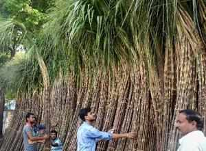 """Kolkata: People buying Sugar Canes in a market for upcoming """"Chhath Puja"""" in K..."""
