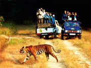 Into the wild! Spot tigers at the Jim Corbett National park, or go bird-watching at Nameri in Assam