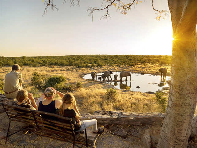 Your family can spend hours sitting on a bench watching the antics of the wildlife in Namibia.