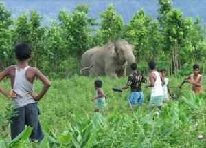 human wildlife conflict World Bank photo