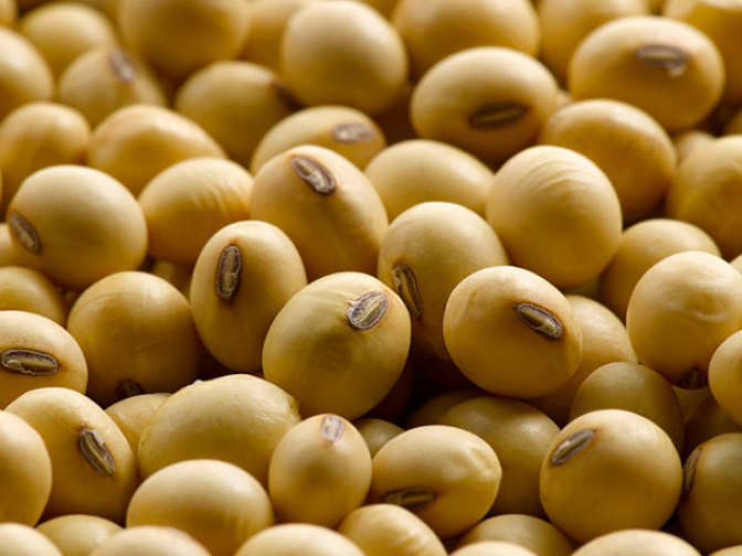 Soybean imports at record as domestic supply tightens: Sources