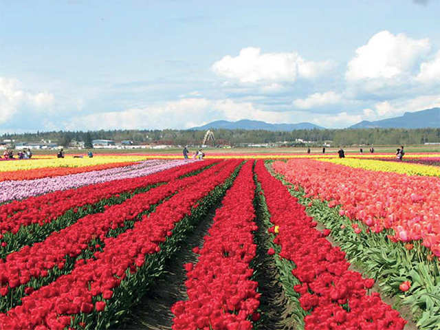 From the Skagit Valley tulip fest to Bruno Mars's world tour, all the events to bookmark for April