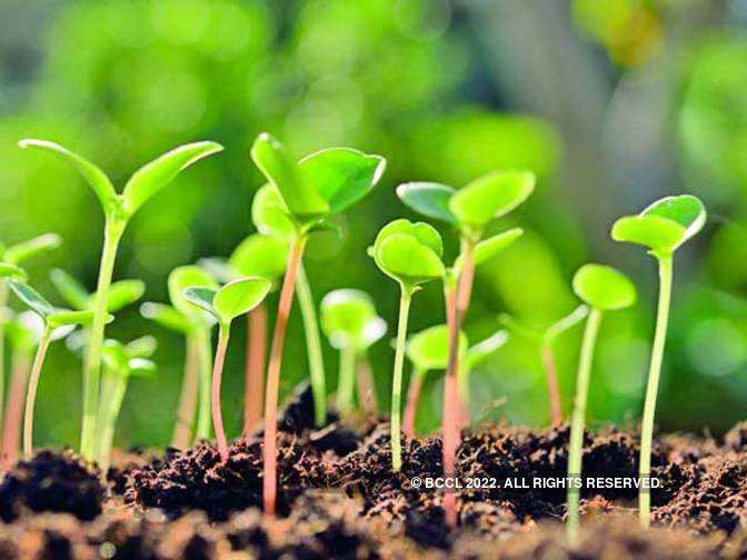 Domestic vegetable seeds industry to hit Rs 8,000 crore in 5 years: Report