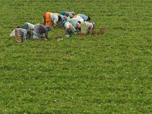 agriculture2.bccl