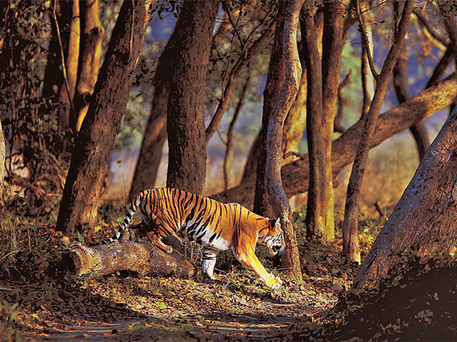 Treasures of Terai: Dudhwa National Park promises a 'Jungle Book' experience