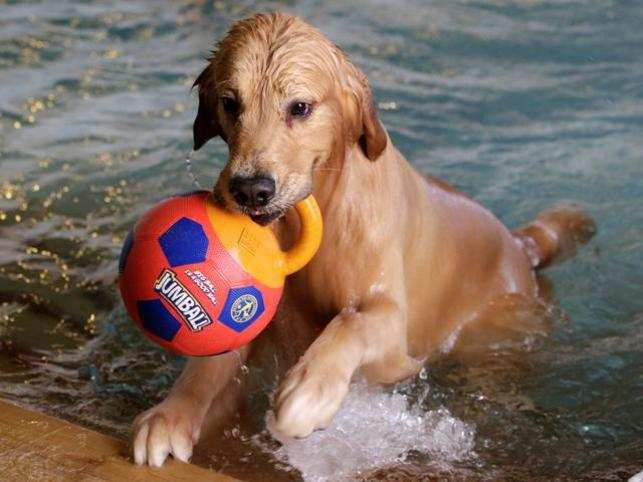 Attention, pet-parents! Smart tips to help you dog beat the heat
