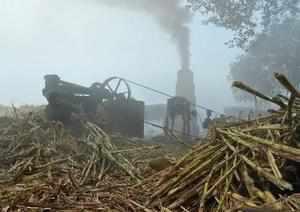 Ghaziabad: A man crushing sugarcanes in a 'Kolhoo' (iron crusher) in the traditi...
