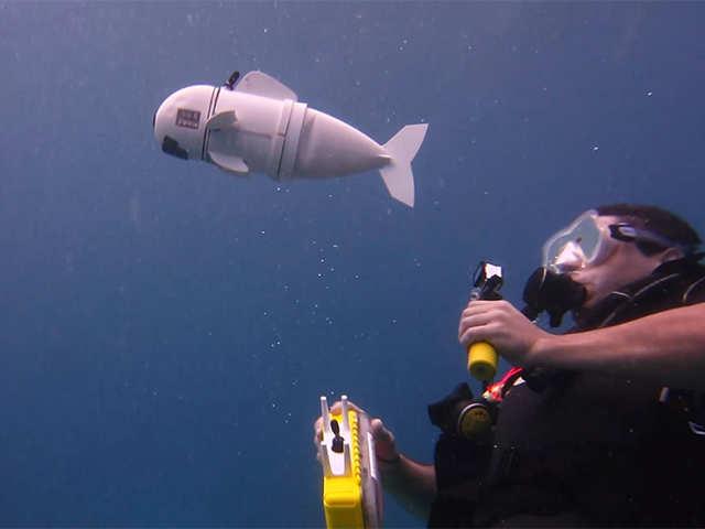 Meet SoFi, the robot fish that can study sea life - A fish-eye view