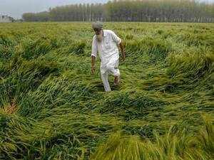 Damage crops