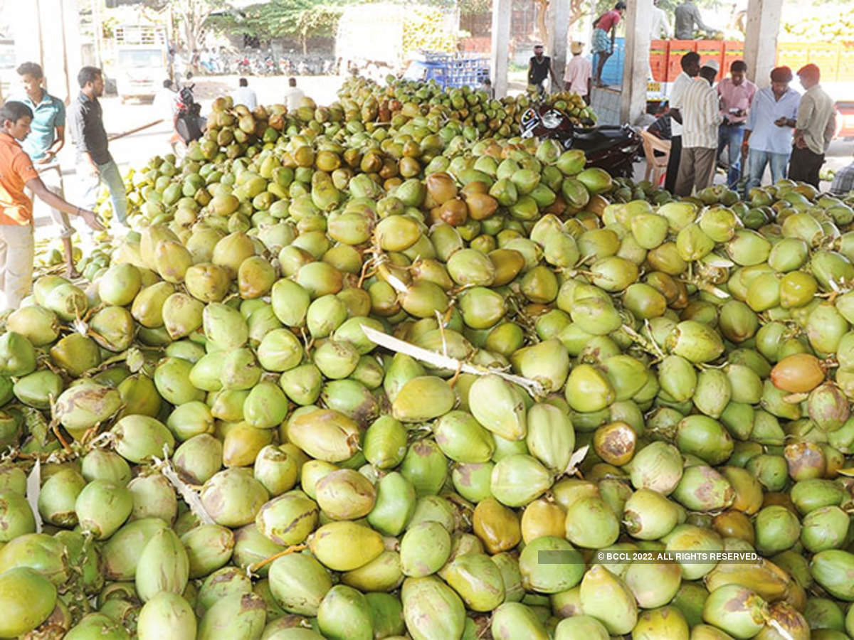 coconut water: Packaged tender coconut water set to turn