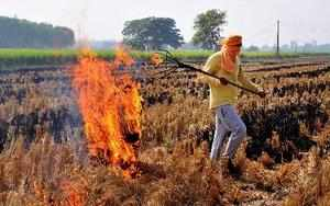 Amritsar: A farmer burns stubbles at his paddy field on the outskirts of Amritsa...
