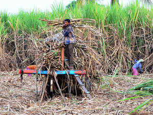 Cabinet approves subsidy of Rs 55 per tonne for sugarcane farmers