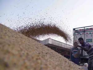 Oilmeal-export