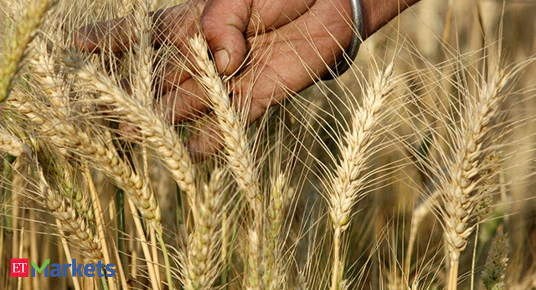 wheat import prices wheat import duty may be doubled the economic
